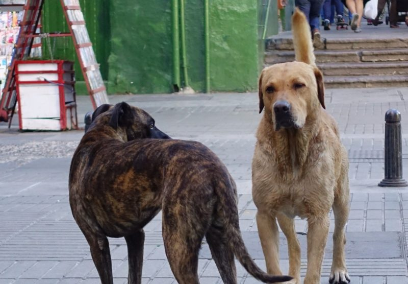 So many dogs roam the streets. They look well fed - we see people putting out kibbles and tubs of water, and stepping patiently over the dog-mat into the store. But these dogs aren'r curb-trained, so mind yournstep.